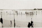 Herring weir, Jonesport 1925