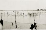 Herring weir, Jonesport 1925