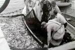 Men in dories netting fish