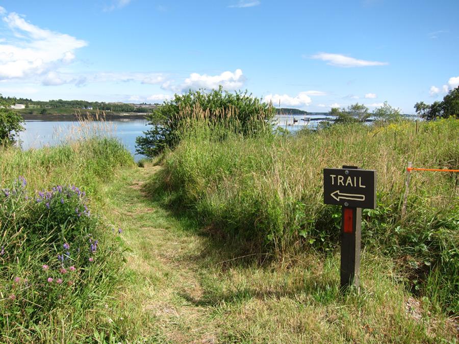 Shackford Head Trail