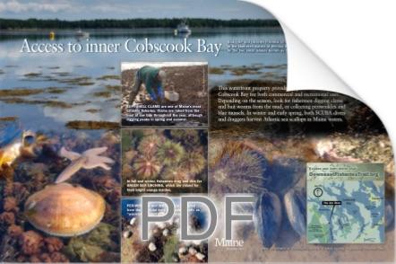 Cobscook Icon copy