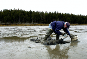 a person bent over digging at the wet sand with a rake
